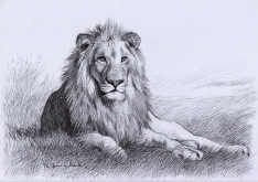 Resting-Lion-Drawing
