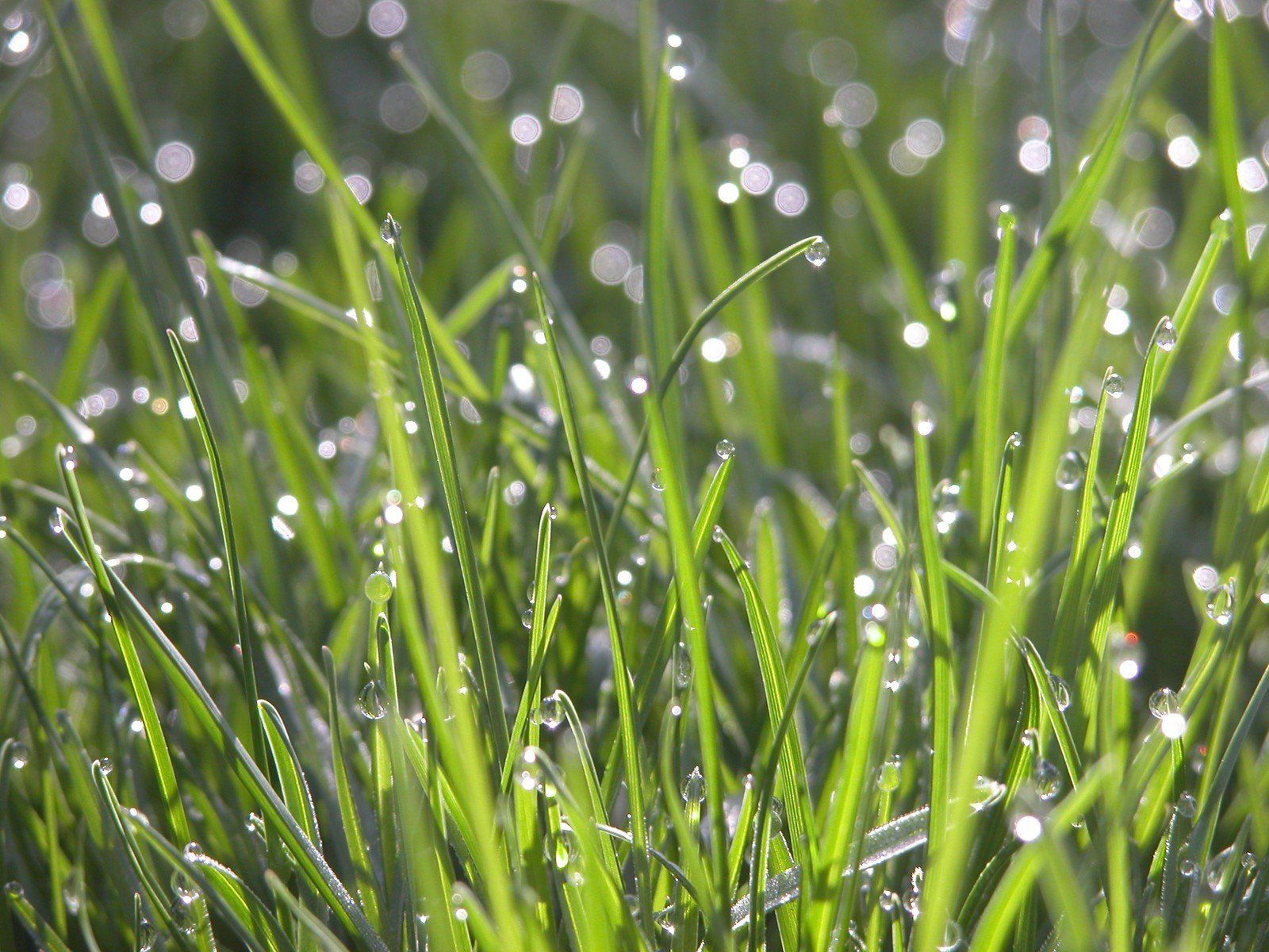 dew-on-grass-1369328