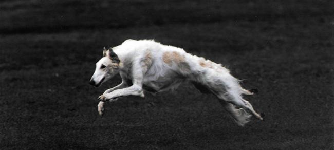 hound-heaven